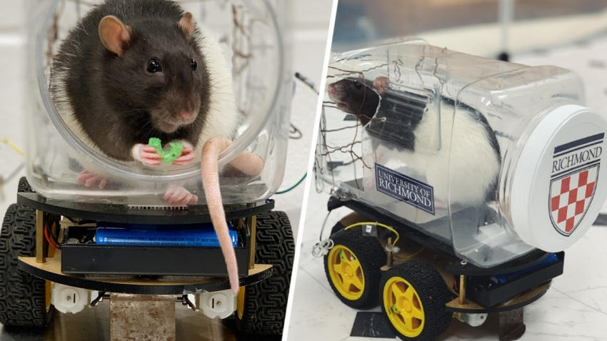 TLMD-university-of-richmond-ratas