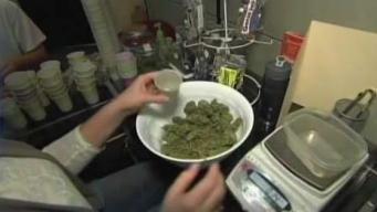 Estudian medidas contra tiendas de marihuana ilegales