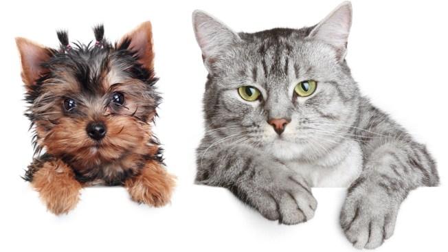"""Revisa aquí el """"adoptómetro"""" de mascotas"""