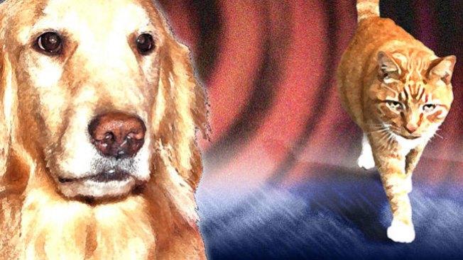 Aumenta inversión para cuidar perros y gatos
